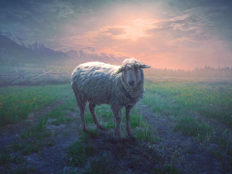 Verloren schaap