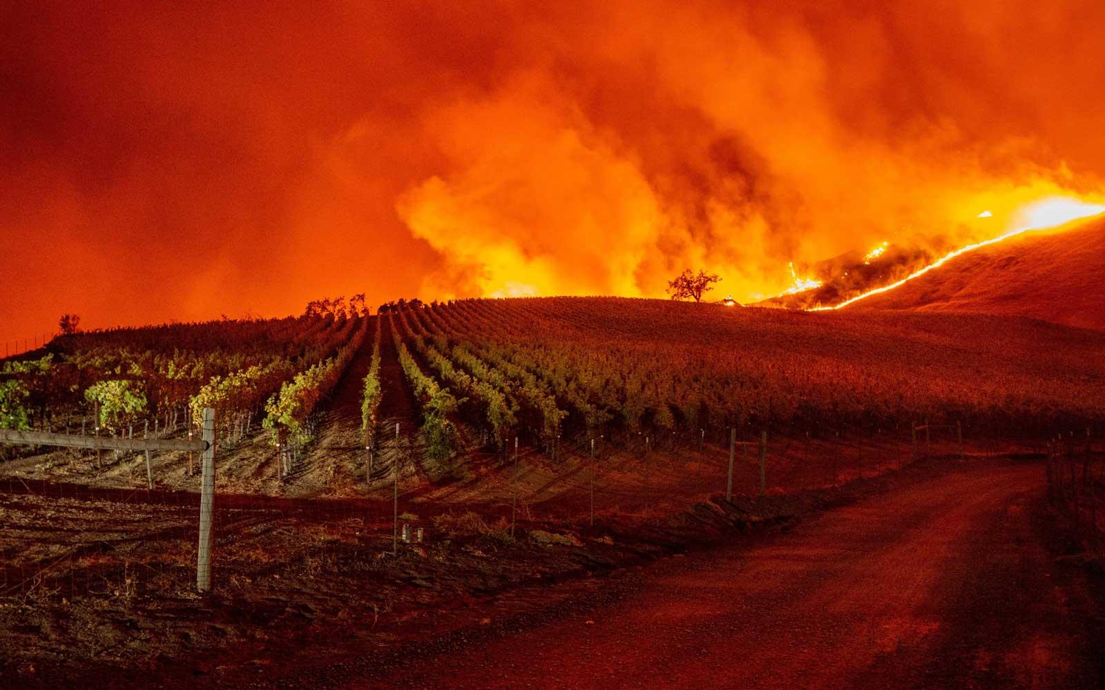 Wijngaard in brand